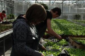 afdeling tuinbouw